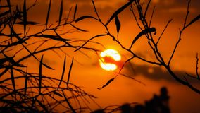 Branch, Sunset, Nature, Tree Royalty Free Stock Image