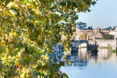 Branch of sycamore tree and Tiber River in Rome Royalty Free Stock Image