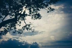 Branch three and sky lomo tone background Stock Photos