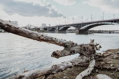 Poniatwoski bridge in Warsaw. A branch thrown out by water and Poniatowski bridge in background. Warsaw, Po;and stock photography