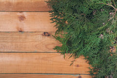 Branch of thuja on wooden baclground Royalty Free Stock Images