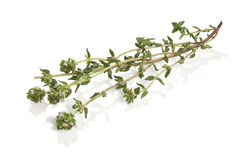 Branch of thyme Stock Photo