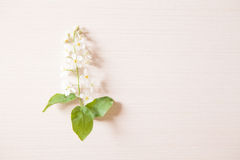 Branch with tiny white flowers. Branches with tiny white flowers and green leaves on light wooden table. Fresh light spring background with copyspace Stock Photography