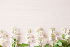 Branch with tiny white flowers. Branches with tiny white flowers and green leaves on light wooden table. Fresh light spring background with copyspace Stock Photos