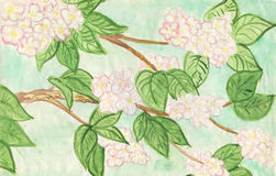 Branch to aple trees abloom. Drawn by watercolors on paper Royalty Free Stock Photography