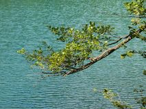 Branch to the lake Royalty Free Stock Photography
