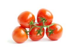 Branch tomato Stock Photos