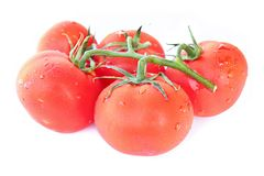 Branch of tomato Royalty Free Stock Images