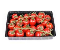 Branch of tomato cherry Stock Photos