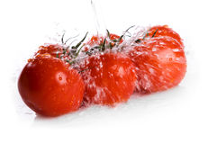 Branch of tomato under pouring water Stock Photo
