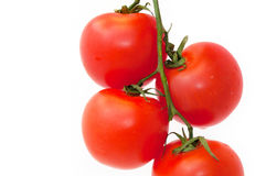 Branch of Tomatoes Stock Image