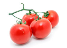 Branch of Tomatoes Royalty Free Stock Photo