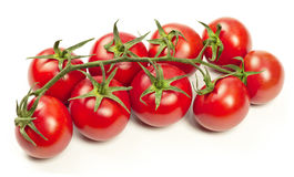Branch of tomatoes Royalty Free Stock Photos
