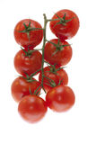 Branch of tomatoes. On a white background Royalty Free Stock Image