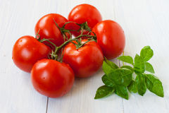 Branch of tomatoes and basil on a light neutral background Stock Photography