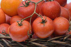 Branch with tomatoes Royalty Free Stock Photography