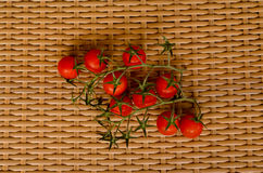 Branch of tomatoes cherry Royalty Free Stock Image