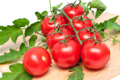 Branch of tomatoes Stock Photography