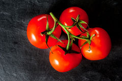 Branch of tomatoes on dark background. Royalty Free Stock Photo