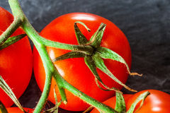 Branch of tomatoes on dark background. Royalty Free Stock Image