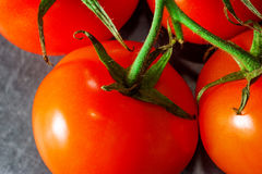 Branch of tomatoes on dark background. Royalty Free Stock Images