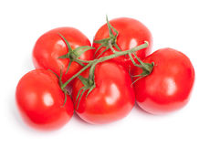 Branch of tomatoes Royalty Free Stock Images