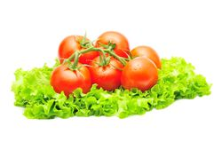 Branch of tomatoes over green salad isolated Stock Photos