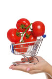 Branch with tomatoes in shopping trolley on  palm Royalty Free Stock Image