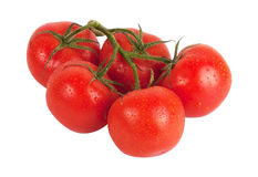 Branch of tomatoes Stock Photo
