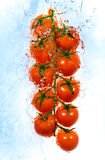 Branch of tomatoes in water splashes Stock Photography