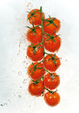 Branch of tomatoes in water splashes Royalty Free Stock Photo
