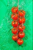 Branch of tomatoes in water splashes Stock Photos