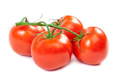 Branch tomatoes on white background. Stock Images
