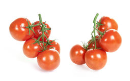 Branch of tomatoes  on white Royalty Free Stock Photos