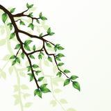 Branch of tree Stock Photo