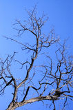 Branch of a tree. On a background of the pure sky Royalty Free Stock Photography