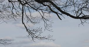 Branch of a tree against the sky.  stock video footage