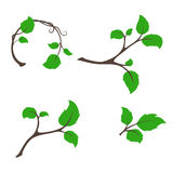 Branch tree with aspen leaves vector set Stock Photo