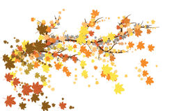 Branch. Tree, autumn, leaves, illustration Stock Images