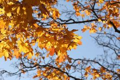 Branch, Tree, Autumn, Yellow Stock Image