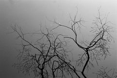 Branch, Tree, Black, Black And White Royalty Free Stock Image