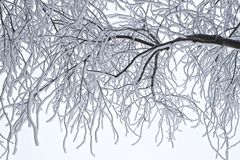 Branch, Tree, Black And White, Twig Stock Image