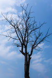Branch of tree on blue sky. Background Royalty Free Stock Photography