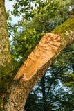 Branch tree broken by storm Stock Photos