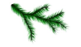 Branch from the tree of the Christmas tree. Conifer tree Royalty Free Stock Images