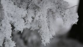 The branch of the tree is covered with snow on all sides.  stock video