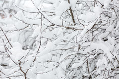 Branch of the tree covered in snow Stock Photos