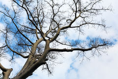 Branch of tree Stock Images