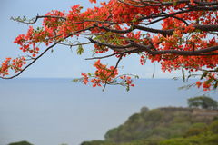 Branch of tree detail. Flowered tree branch detail with the sea in the background Royalty Free Stock Photos