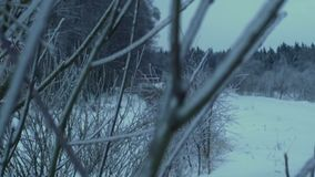 Branch of the tree in the forest covered with ice and snow.  stock footage